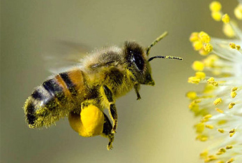 national-honey-bee-day